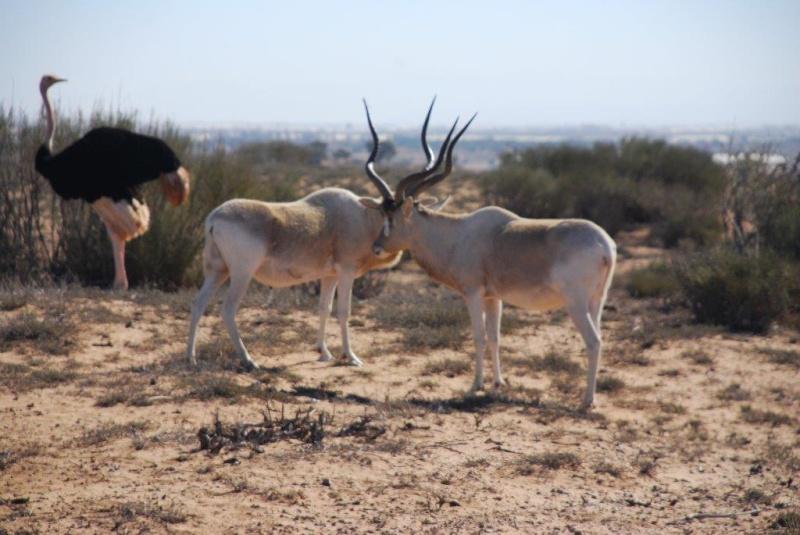 [Maroc Camp/Dernières nouvelles] Camping TAKAT (janvier 2016) Dsc_7912