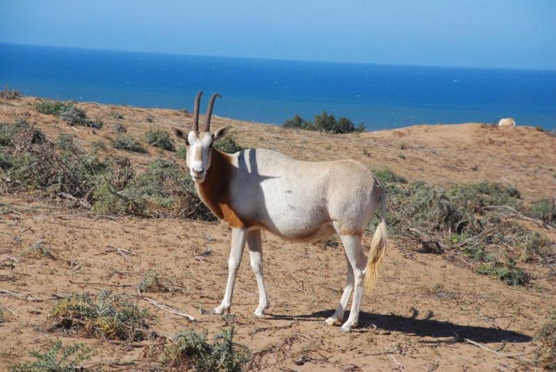 [Maroc Camp/Dernières nouvelles] Camping TAKAT (janvier 2016) Dsc_8010