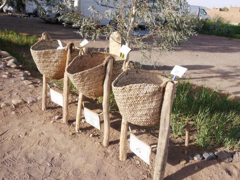 [Maroc Camp/Dernières nouvelles] De la Ferme Serdrar a 20 km de Tazzarine. P1250510