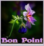 LES VOTES POUR LE FORUM - Page 36 Bp510
