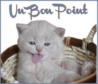 LES VOTES POUR LE FORUM - Page 36 Bpchat11