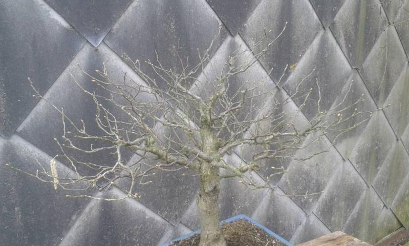 arbres à céder (2016) Image118
