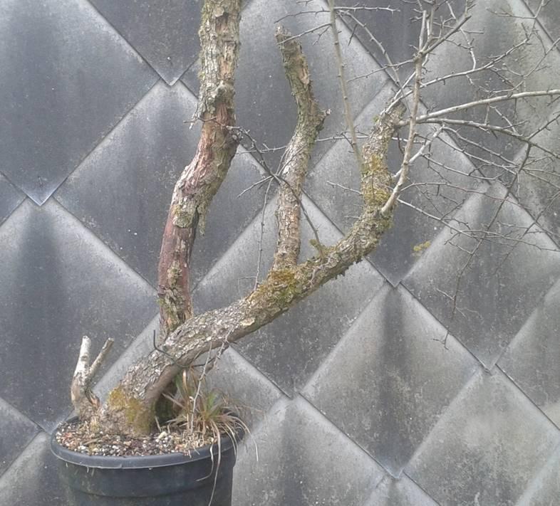arbres à céder (2016) Image210