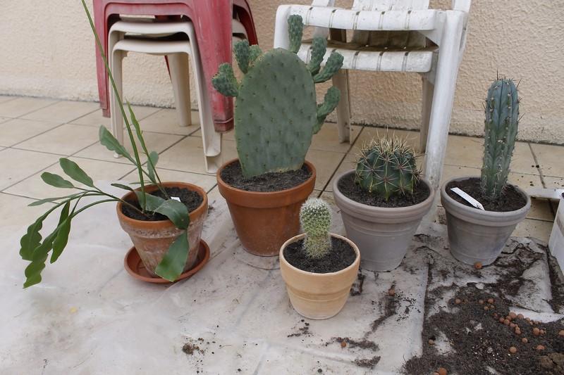 Rempotage cactus 19 mars 2016 Rempot30