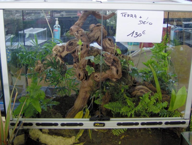 bourse terrariophile Hpim0415