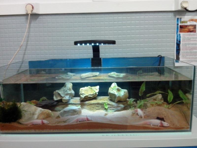 nouvelle cuve à axolotls Img_2010