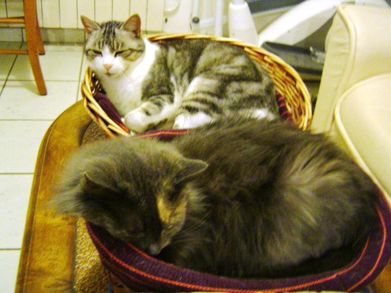 Nos meubles sont il aussi adaptés pour nos animaux ? Chats_10