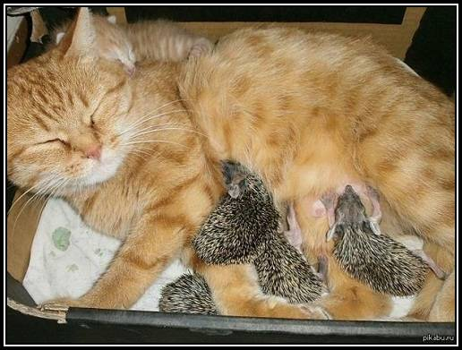 Insolite  animaux . - Page 10 Chatte10