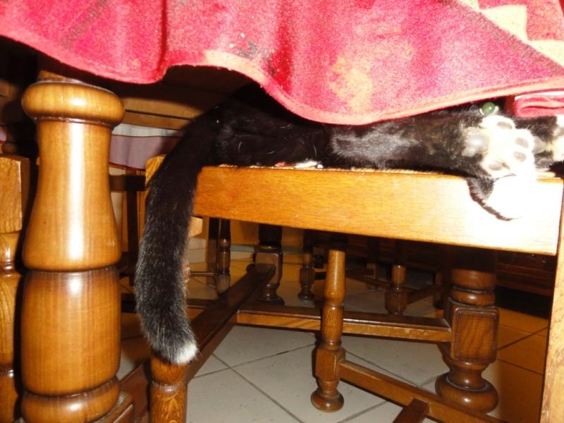 Nos meubles sont il aussi adaptés pour nos animaux ? Oeil_s10