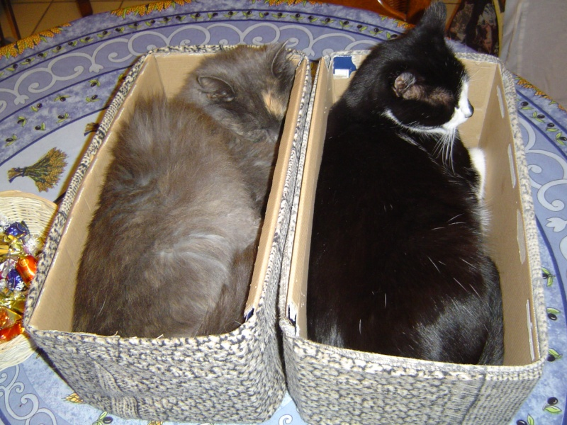 Nos meubles sont il aussi adaptés pour nos animaux ? Touffu10