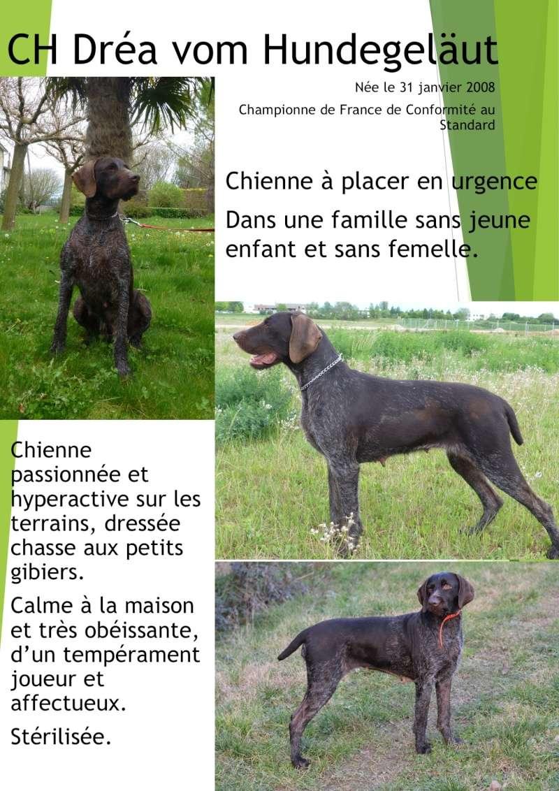 A placer CH Dréa vom Hundegelaut Ch_dry10