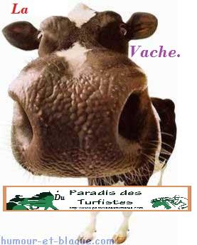 Nos amis, les animaux(quand ils font semblant d'être bête) - Page 3 Vache_10
