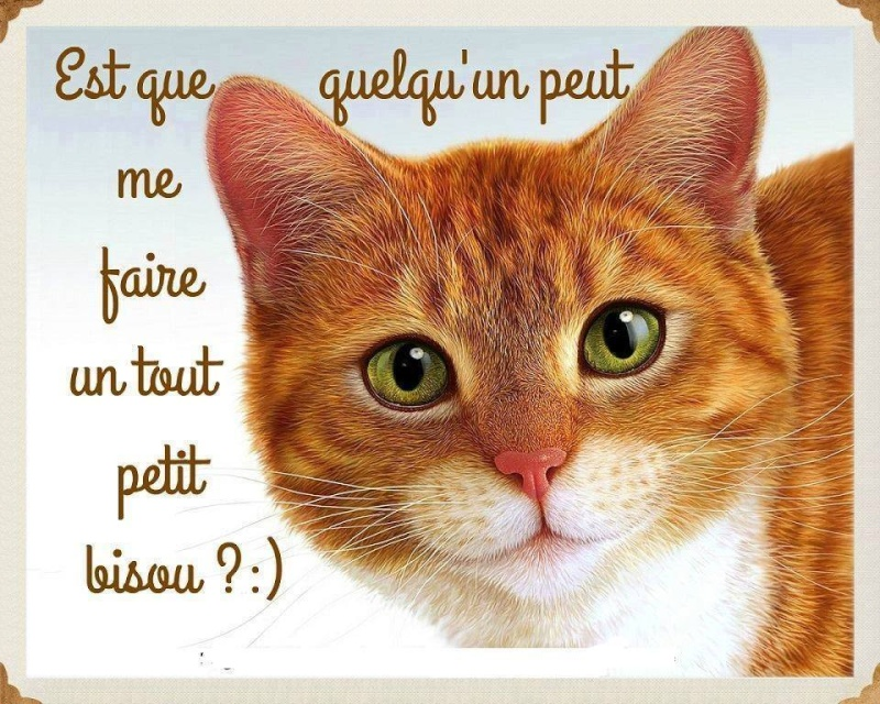 Les chats - Page 36 10373910