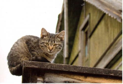 Les chats - Page 36 897fa210