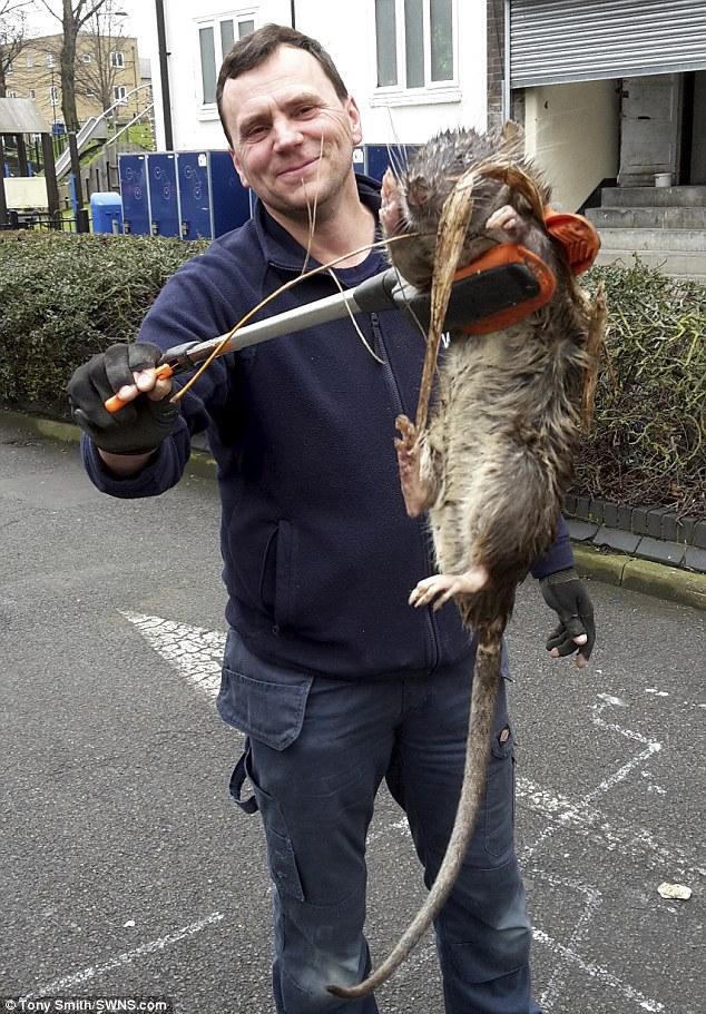 Rat nouveau !!! Supera10