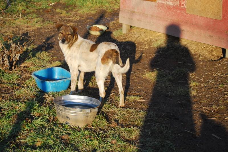 Alba, chienne magnifique, née en 2012 Dsc_0911