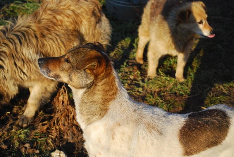 Alba, chienne magnifique, née en 2012 Dsc_0912