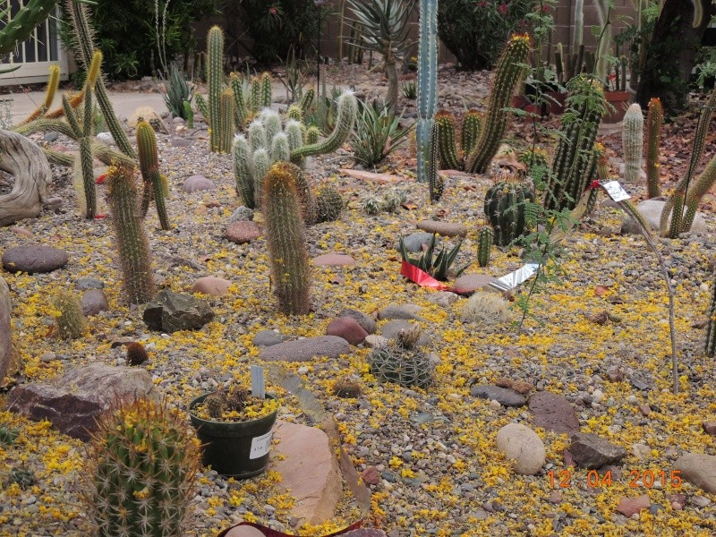 Cacti and Sukkulent in Köln, every day new flowers in the greenhouse Part 137 9036810