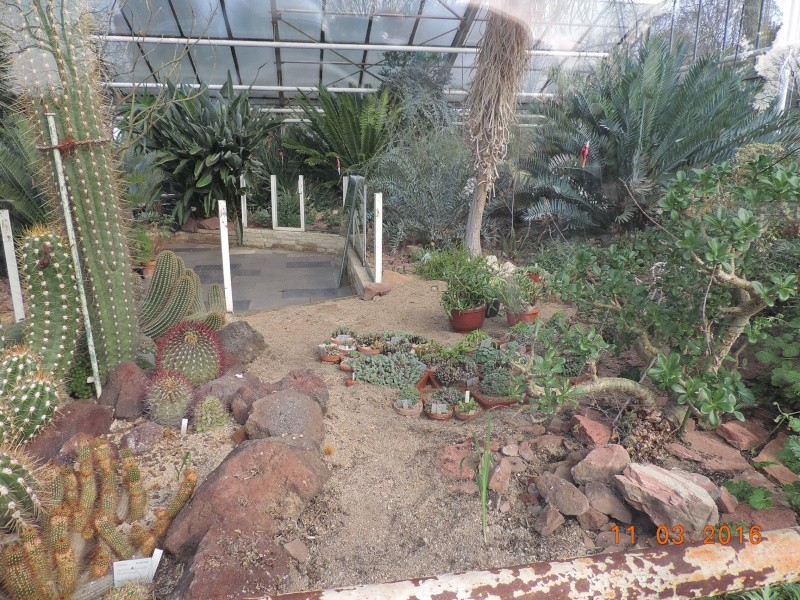 Cacti and Sukkulent in Köln, every day new flowers in the greenhouse Part 138 Bild_012