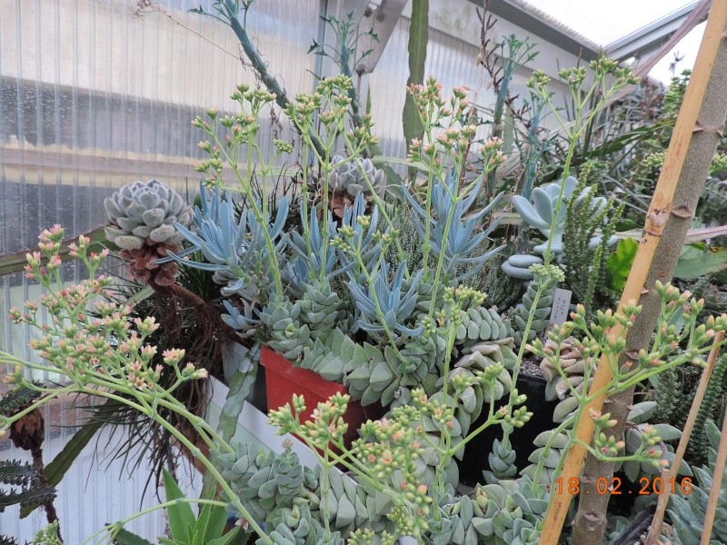 Cacti and Sukkulent in Köln, every day new flowers in the greenhouse Part 137 Bild_122