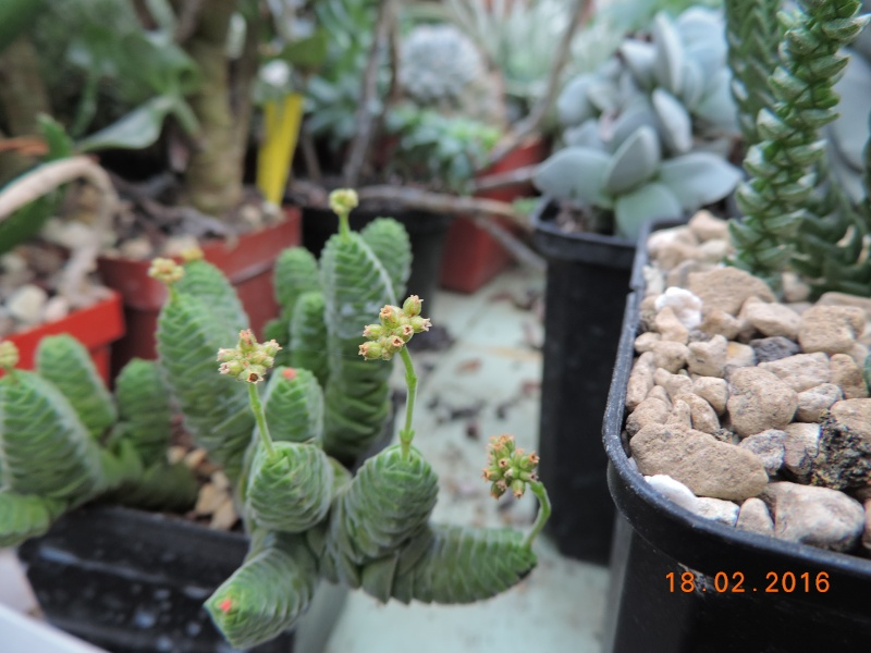 Cacti and Sukkulent in Köln, every day new flowers in the greenhouse Part 137 Bild_124
