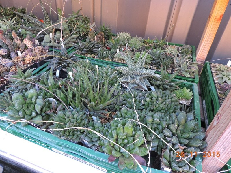 Cacti and Sukkulent in Köln, every day new flowers in the greenhouse Part 138 Bild_161