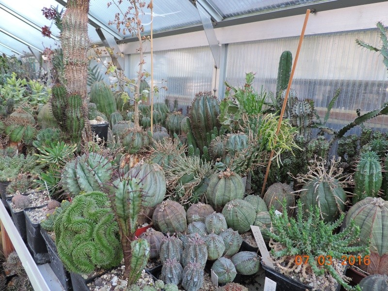 Cacti and Sukkulent in Köln, every day new flowers in the greenhouse Part 138 Bild_181