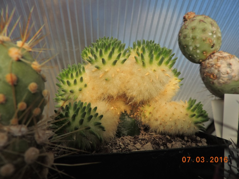 Cacti and Sukkulent in Köln, every day new flowers in the greenhouse Part 138 Bild_182