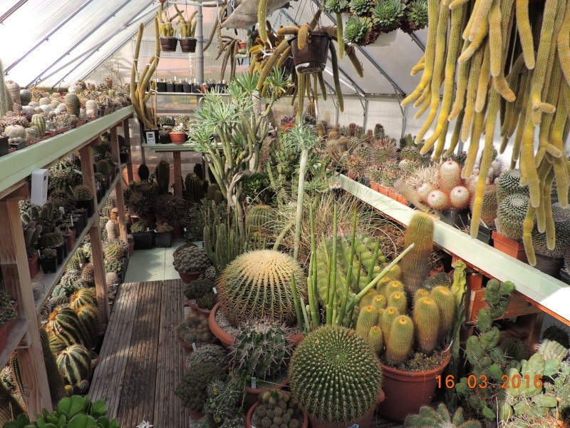Cacti and Sukkulent in Köln, every day new flowers in the greenhouse Part 138 Bild_200