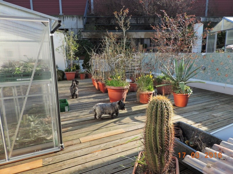 Cacti and Sukkulent in Köln, every day new flowers in the greenhouse Part 138 Bild_209