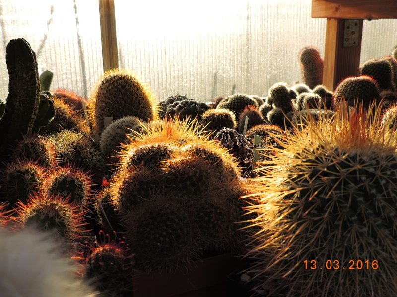 Cacti and Sukkulent in Köln, every day new flowers in the greenhouse Part 138 Bild_227