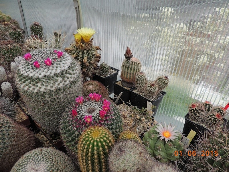 Cacti and Sukkulent in Köln, every day new flowers in the greenhouse Part 139 Bild_913