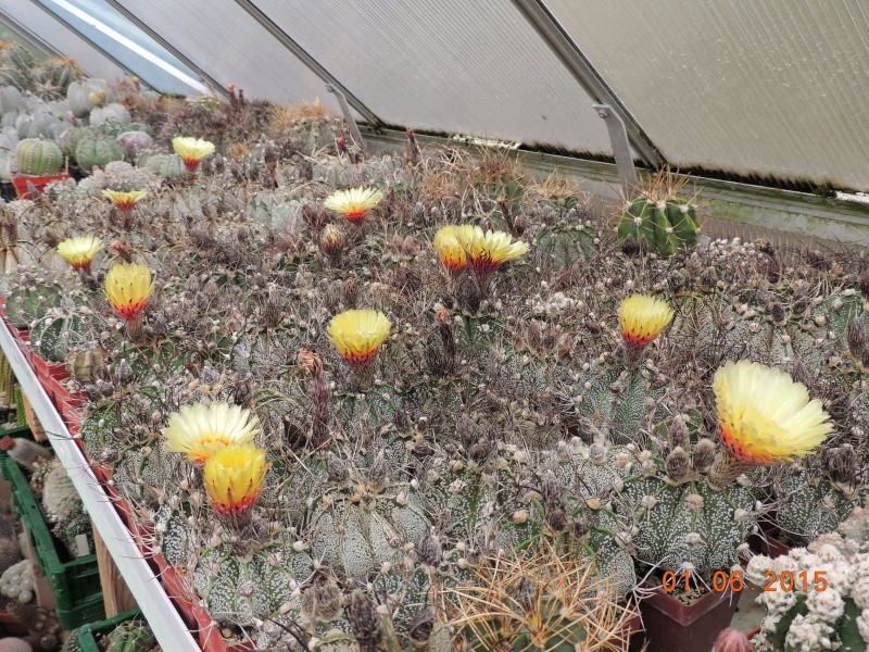 Cacti and Sukkulent in Köln, every day new flowers in the greenhouse Part 139 Bild_934