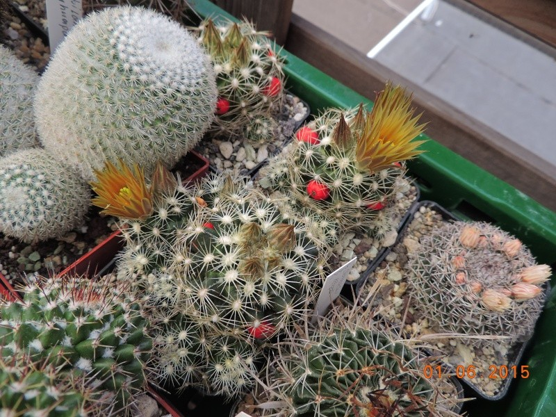Cacti and Sukkulent in Köln, every day new flowers in the greenhouse Part 139 Bild_937