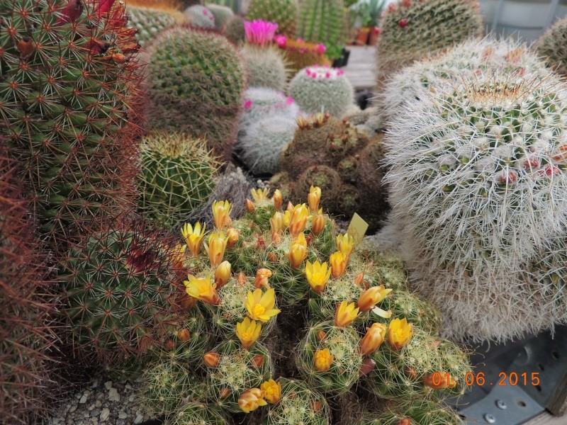 Cacti and Sukkulent in Köln, every day new flowers in the greenhouse Part 139 Bild_942