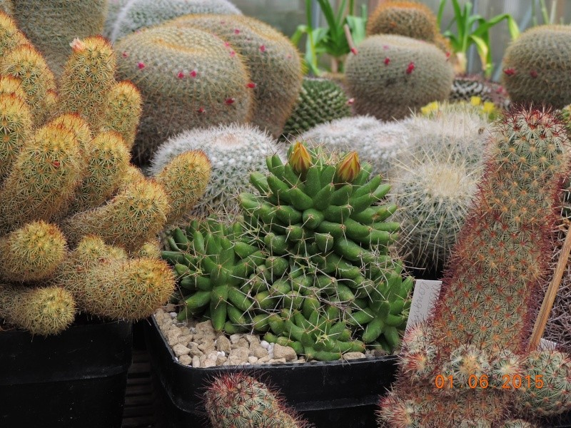 Cacti and Sukkulent in Köln, every day new flowers in the greenhouse Part 139 Bild_946
