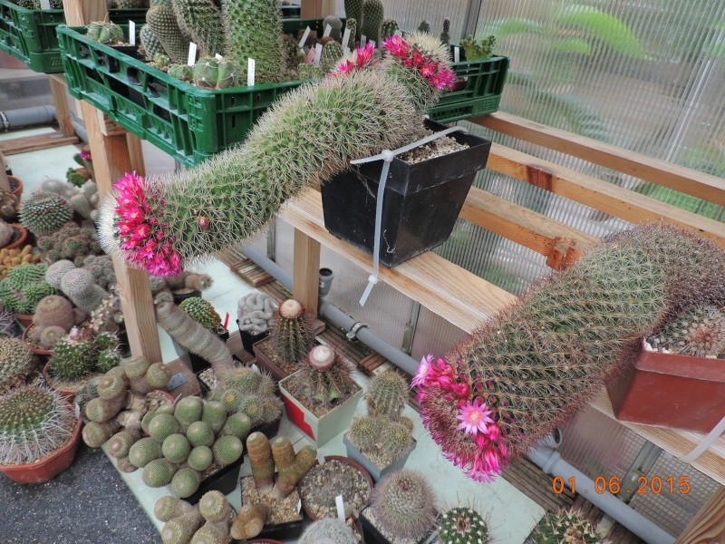 Cacti and Sukkulent in Köln, every day new flowers in the greenhouse Part 139 Bild_947