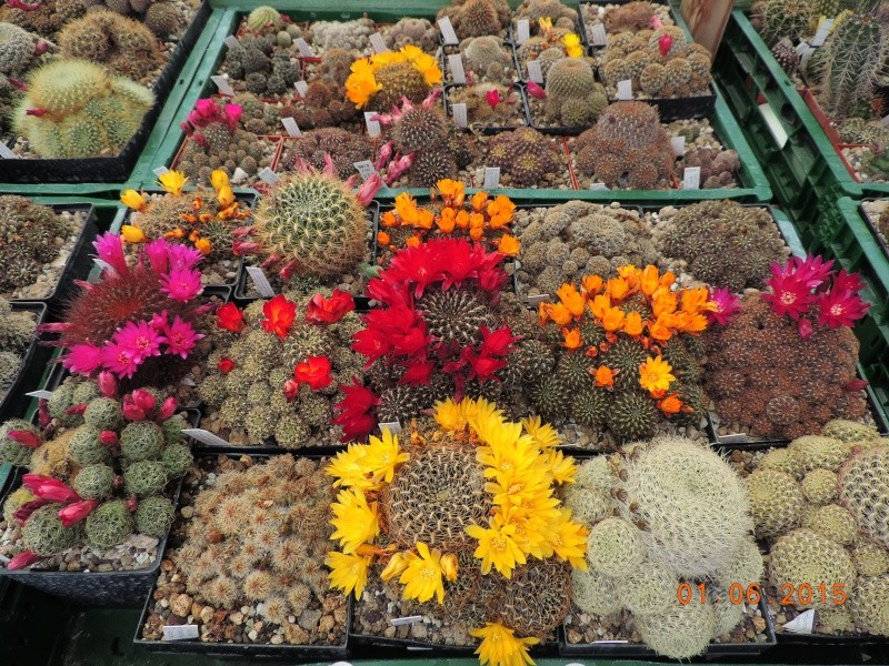 Cacti and Sukkulent in Köln, every day new flowers in the greenhouse Part 139 Bild_950