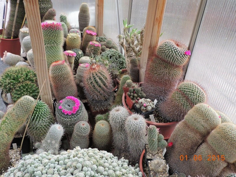 Cacti and Sukkulent in Köln, every day new flowers in the greenhouse Part 139 Bild_959