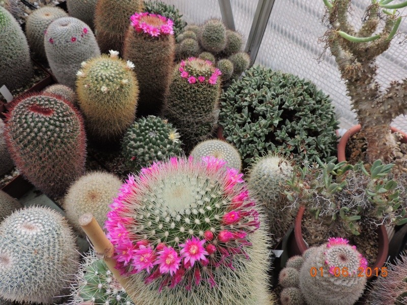 Cacti and Sukkulent in Köln, every day new flowers in the greenhouse Part 139 Bild_961