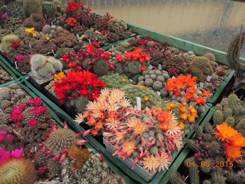 Cacti and Sukkulent in Köln, every day new flowers in the greenhouse Part 139 Bild_968