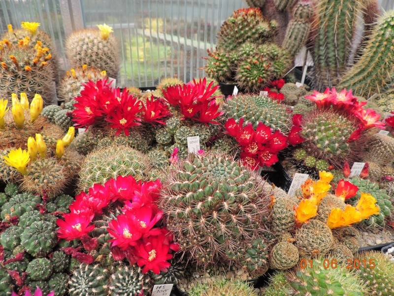Cacti and Sukkulent in Köln, every day new flowers in the greenhouse Part 139 Bild_975