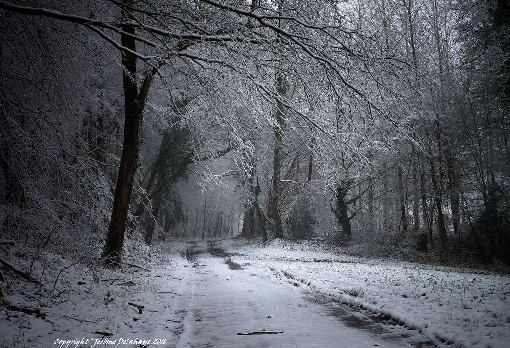 Il a neigé sur ma campagne Picarde +1 Sans_t16