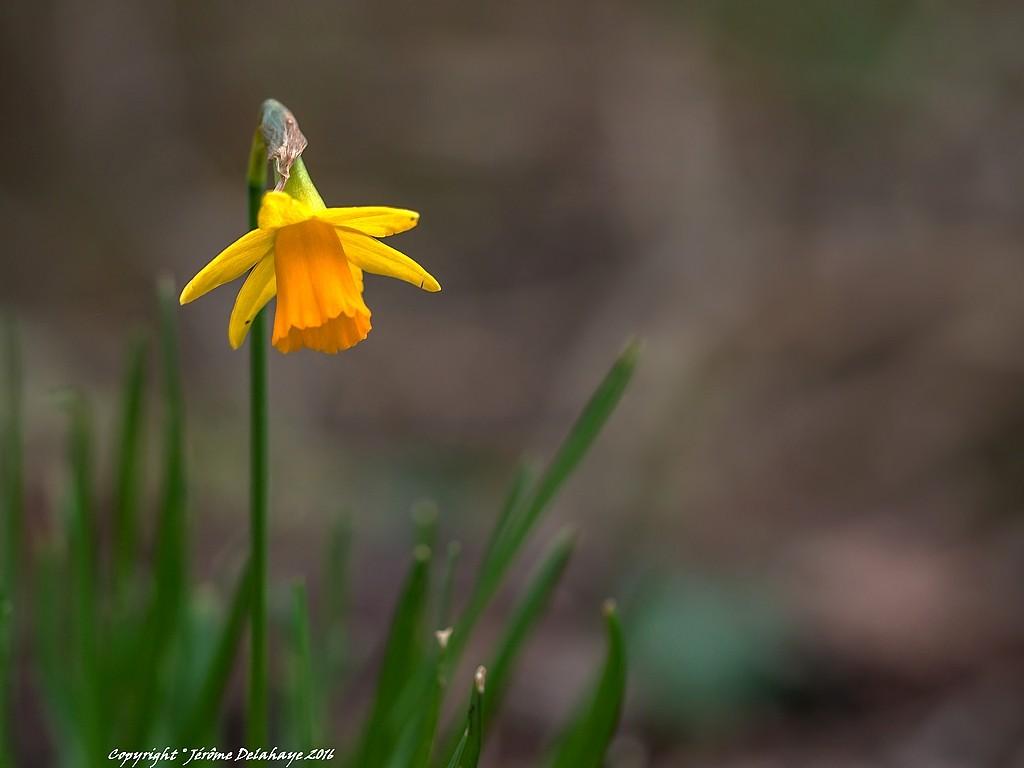 Symboles du printemps Sans_t18