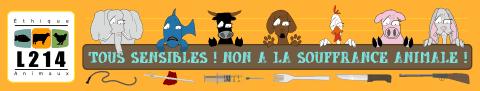 MILA typée griffon ADOPTEE Ban-to11