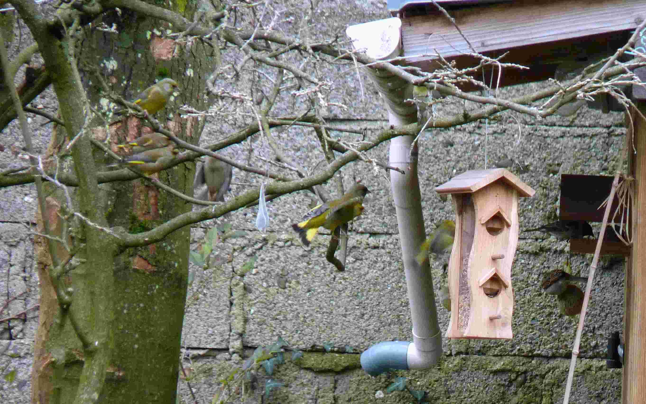 Les oiseaux chantent - Page 2 P1160312