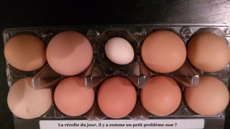Une première, drôle d'œuf ?  Oeufs10