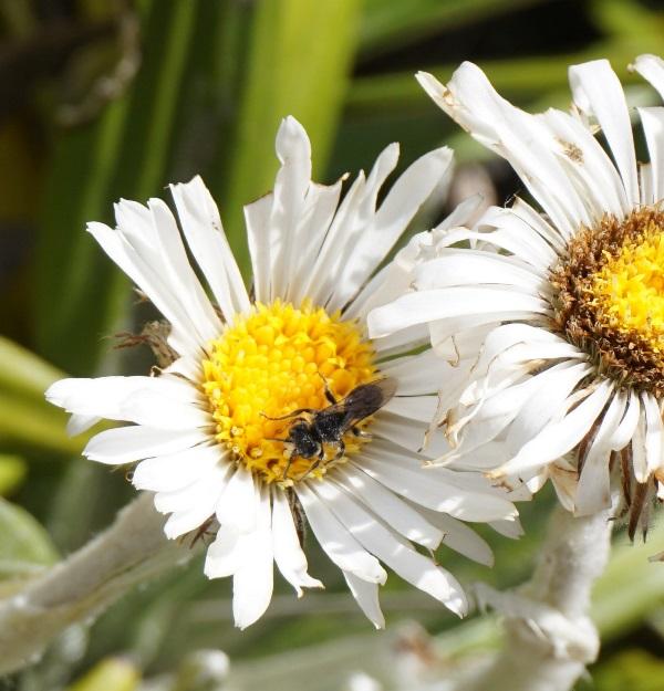 Hello les fêlés d'insectes !! Spipol11