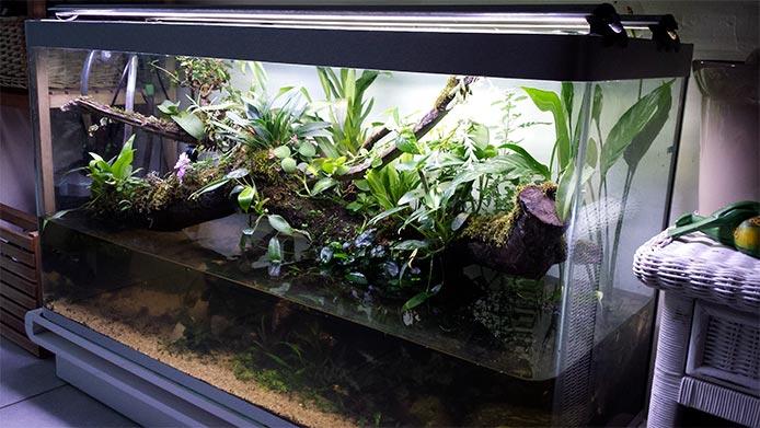 Mur végétal avec aquarium de 320L ---> Paludarium - Page 15 1210