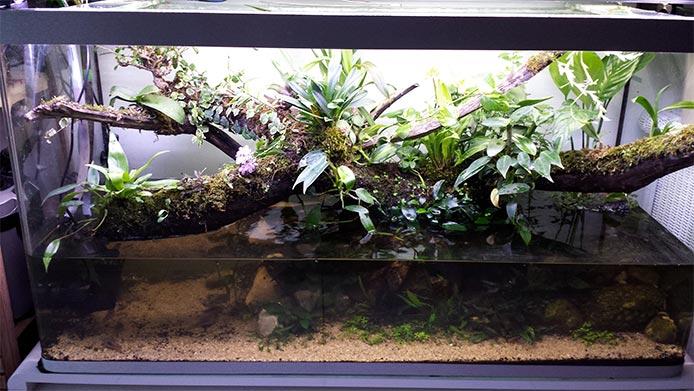 Mur végétal avec aquarium de 320L ---> Paludarium - Page 15 1310